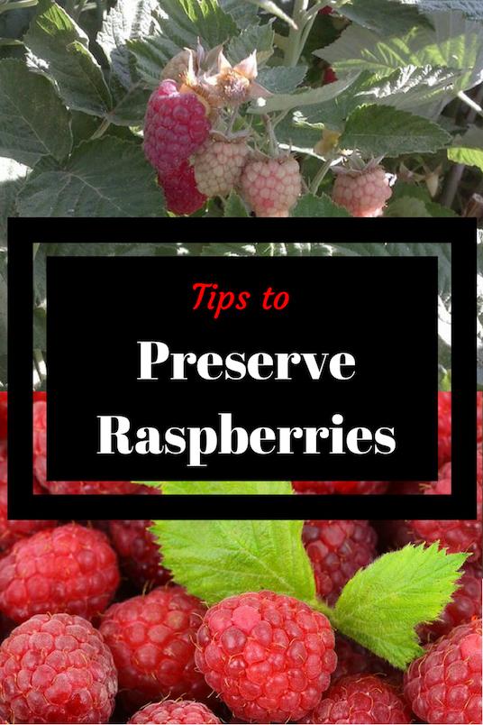 Tips to Preserve Raspberries, raspberries hangin on bushes, raspberries in a bowl with a green leaf