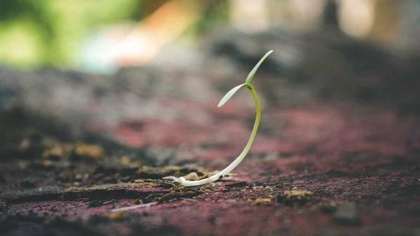 Carrot seedling in the soil